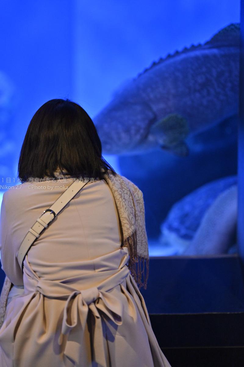 【水族館スナップ撮影】水槽の中に夢中 ♪